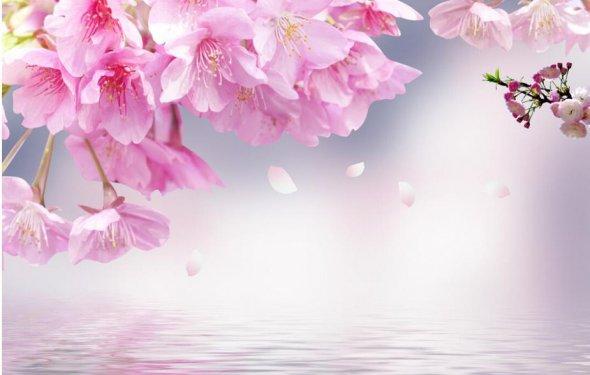 Pink cherry blossoms 3d
